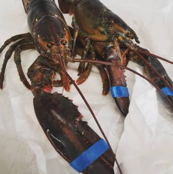 Most delicious Lobsters from Fin and Flounder